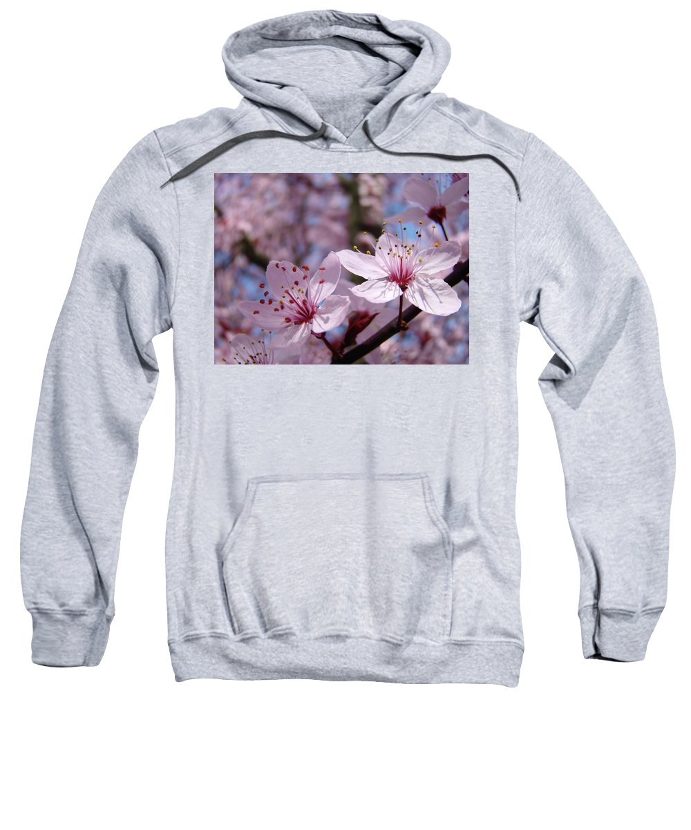 Blossom Sweatshirt featuring the photograph Blossoms Art Prints Pink Spring Tree Blossoms Canvas Baslee Troutman by Baslee Troutman