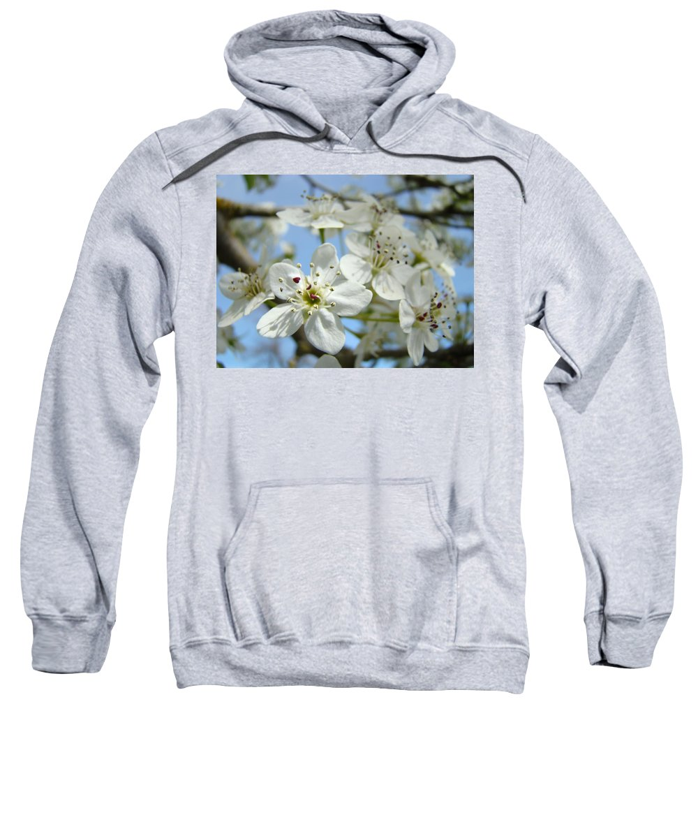 Blossom Sweatshirt featuring the photograph Blossoms Art Prints Whtie Spring Tree Blossoms Blue Sky Baslee by Baslee Troutman