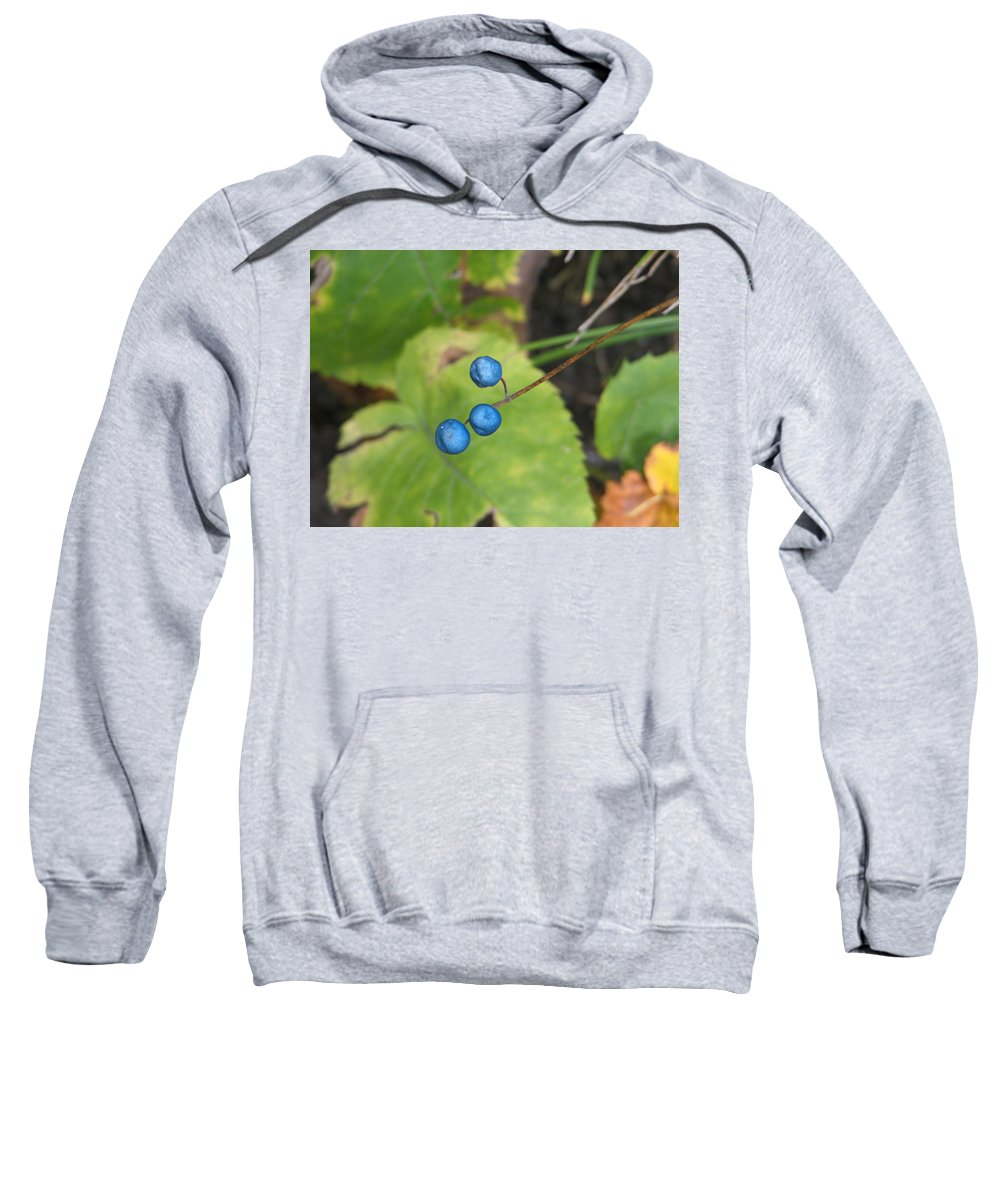 Blue Sweatshirt featuring the photograph Blue Berries by Kelly Mezzapelle