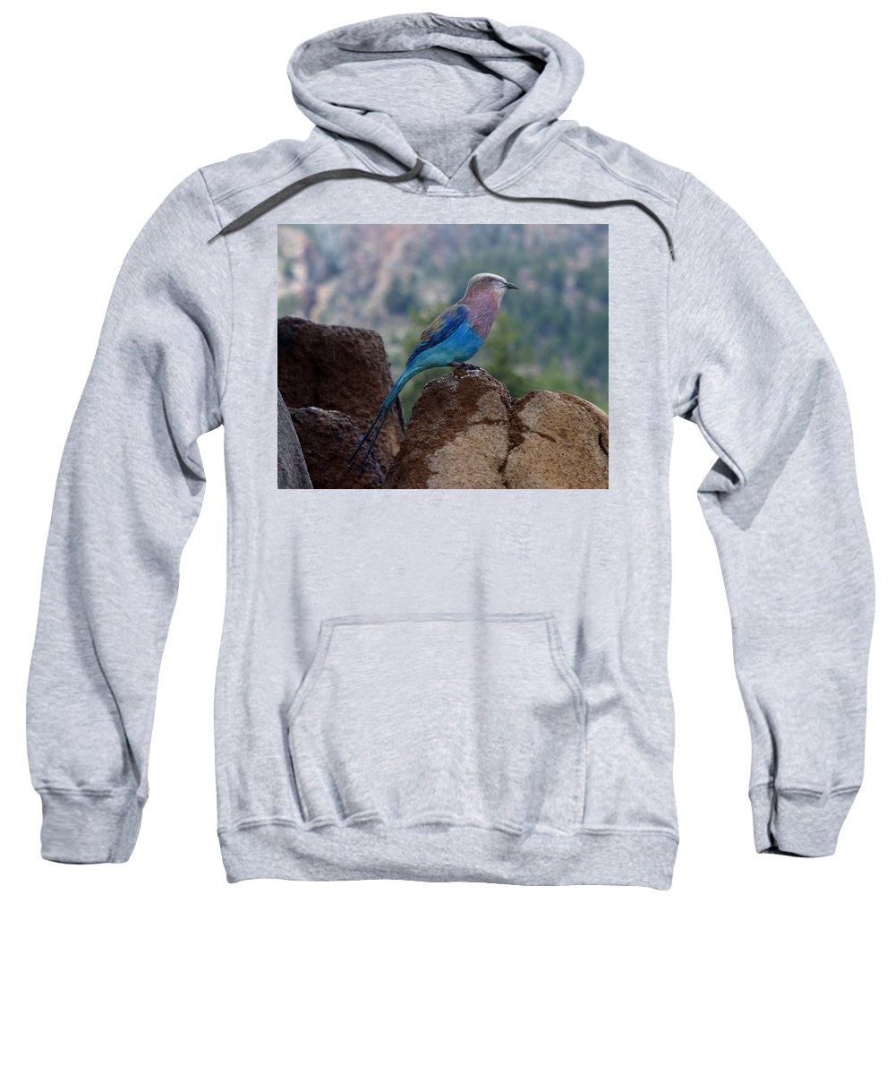Bird Sweatshirt featuring the photograph Blue Bird by Anthony Jones