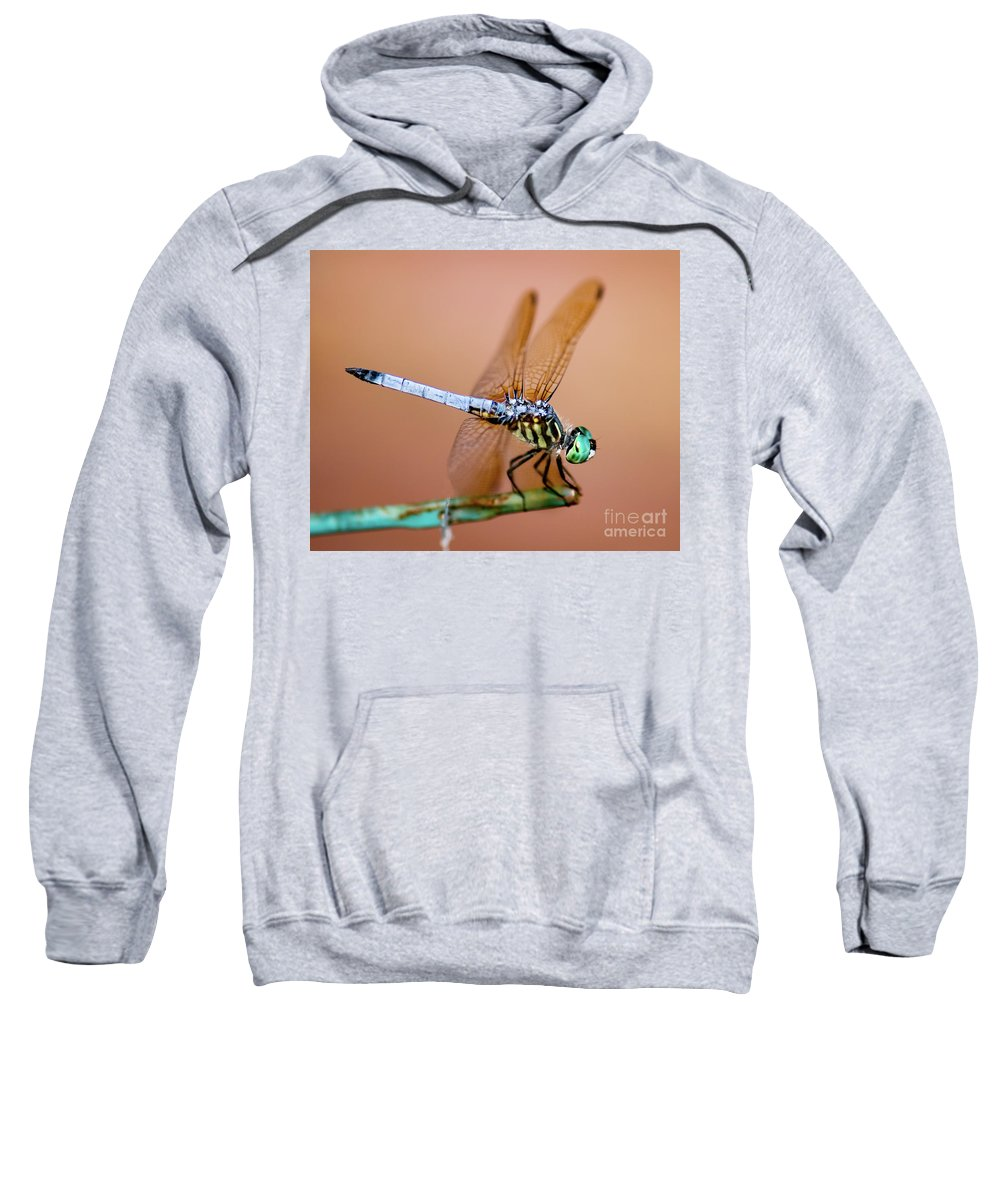Blue Dasher Dragonfly Sweatshirt featuring the photograph Blue Dasher Dragonfly by Betty LaRue
