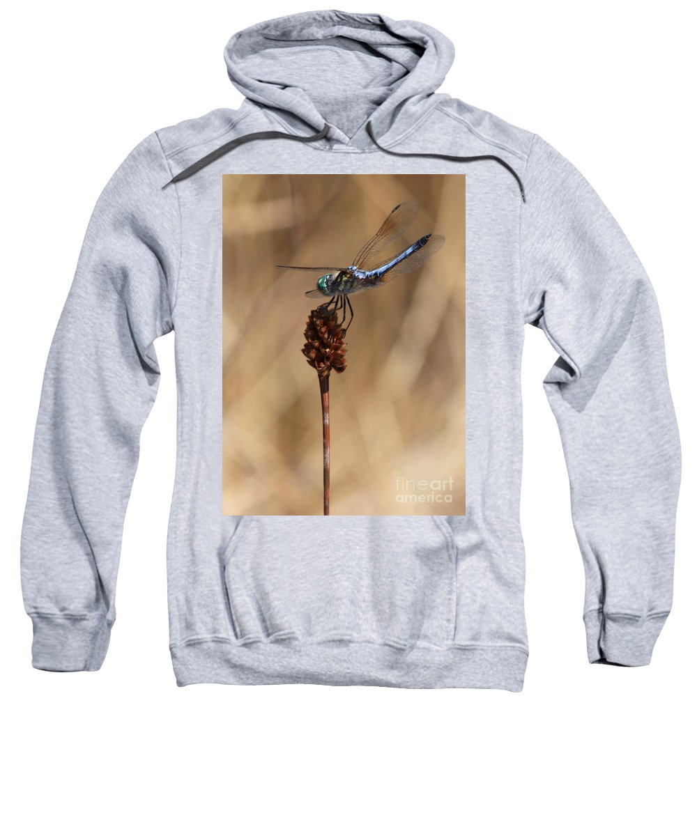 Dragonfly Sweatshirt featuring the photograph Blue Dragonfly On Brown Reed by Carol Groenen