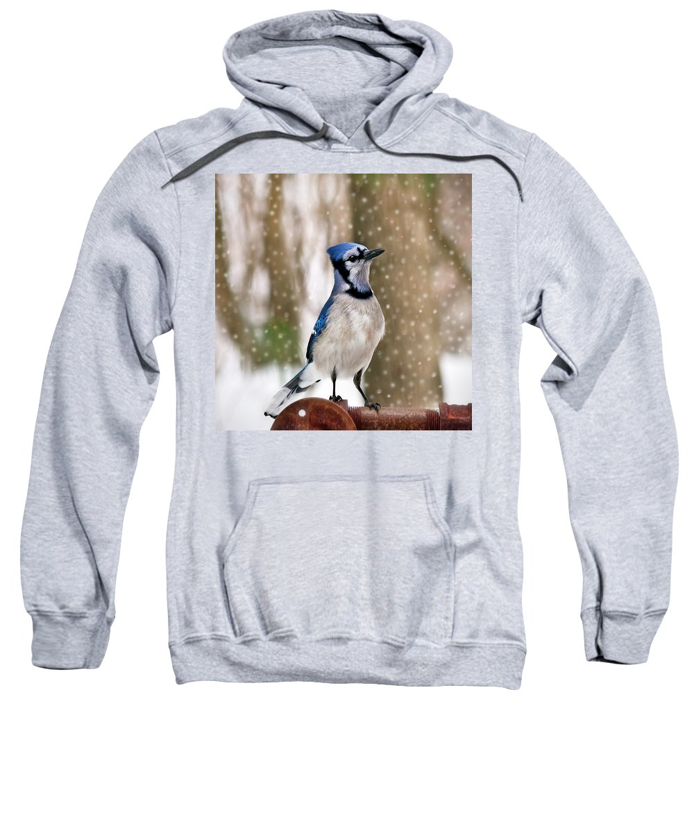 Blue Sweatshirt featuring the photograph Blue For You by Evelina Kremsdorf