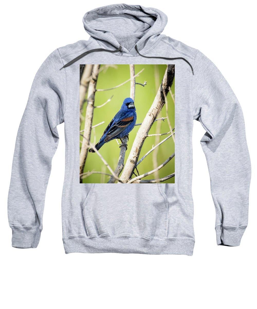 Bird Sweatshirt featuring the photograph Blue Grosbeak by Travis Boyd