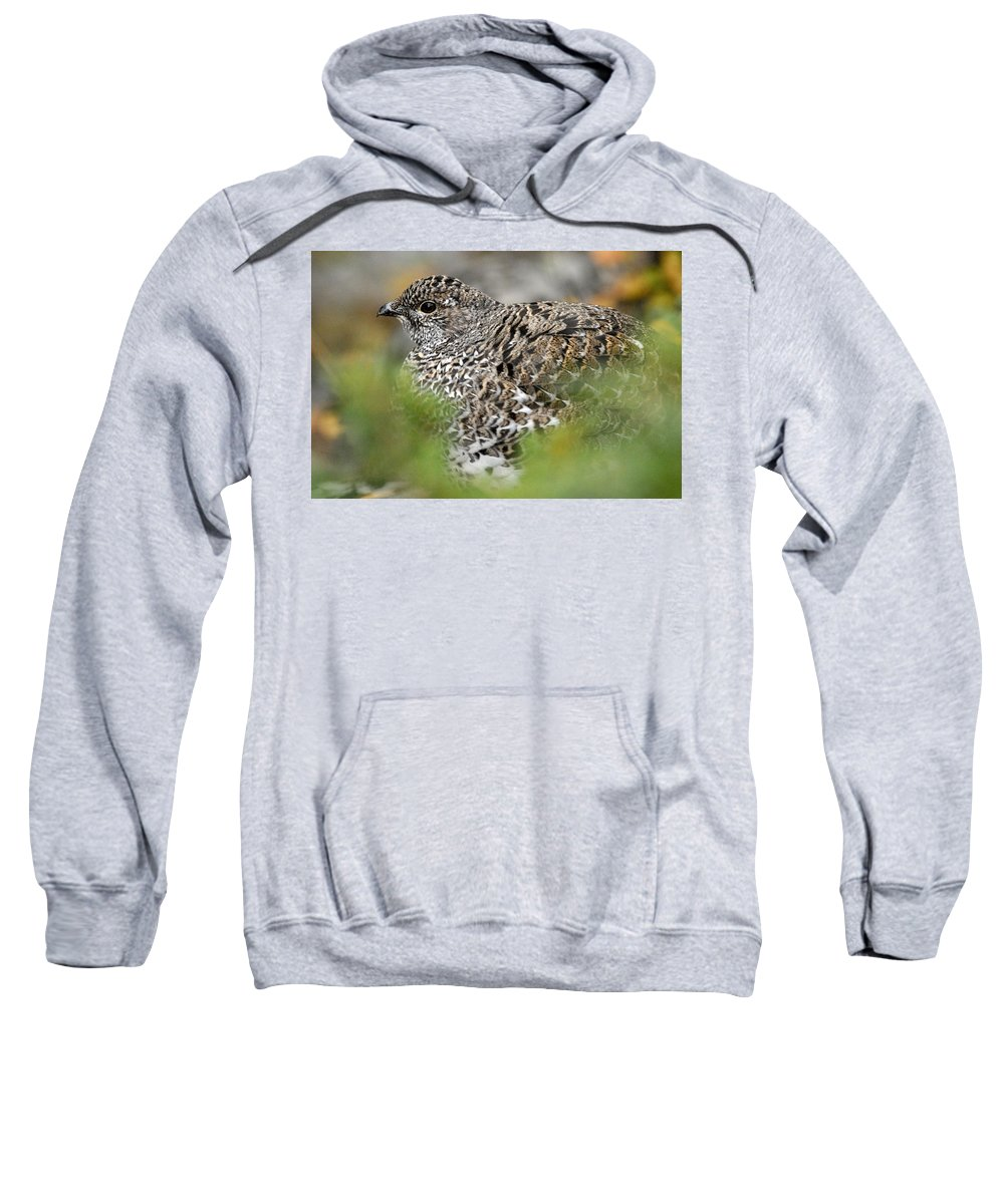 Blue Grouse Sweatshirt featuring the photograph Blue Grouse Hen 1 by Larry Ricker