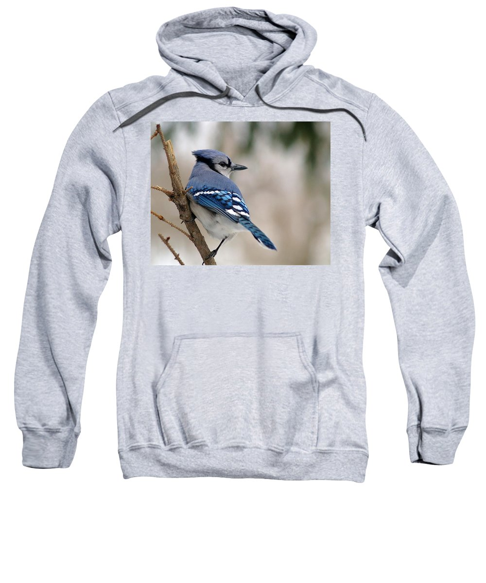 Blue Jay Sweatshirt featuring the photograph Blue Jay by Gaby Swanson