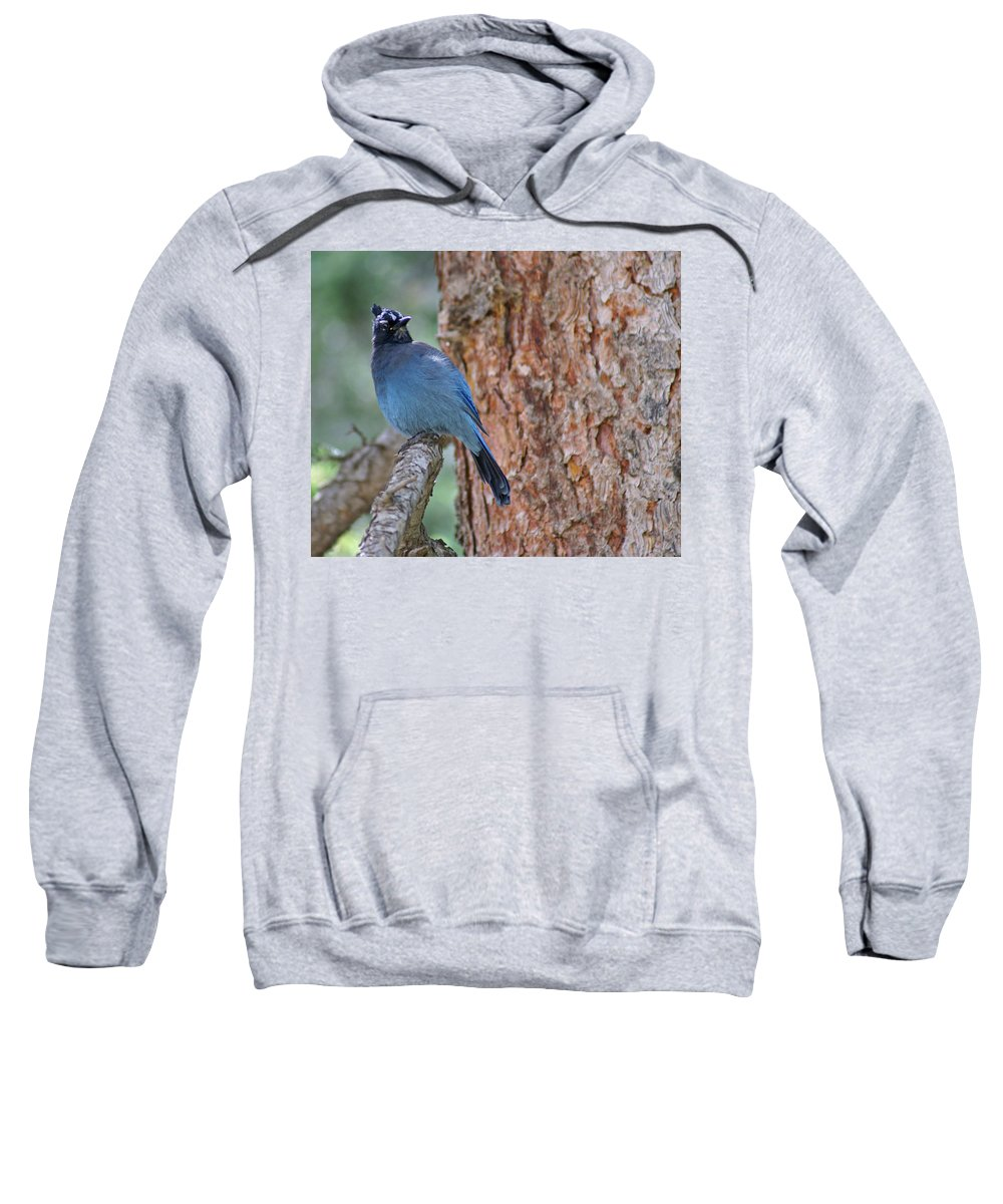 Blue Jay Sweatshirt featuring the photograph Blue Jay by Heather Coen