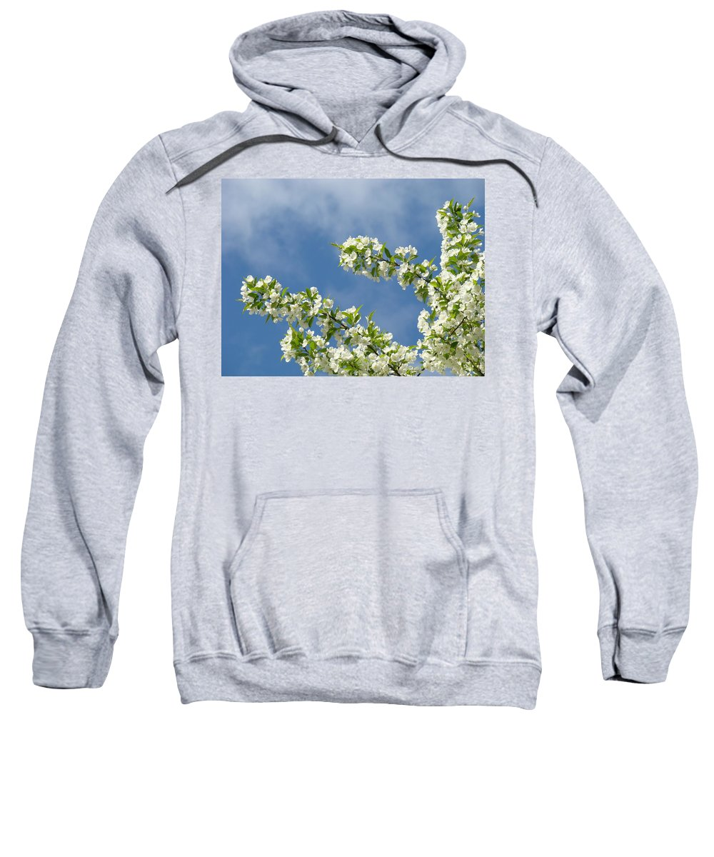 Blossom Sweatshirt featuring the photograph Blue Sky White Clouds Landscape Art White Tree Blossoms Spring by Baslee Troutman