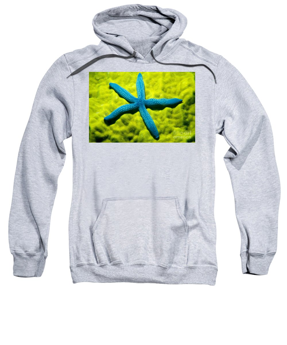 Animal Art Sweatshirt featuring the photograph Blue Starfish On Poritirs by Mitch Warner - Printscapes