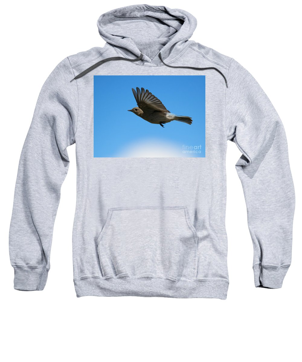 Mountain Bluebird Sweatshirt featuring the photograph Bluebird Glide by Mike Dawson