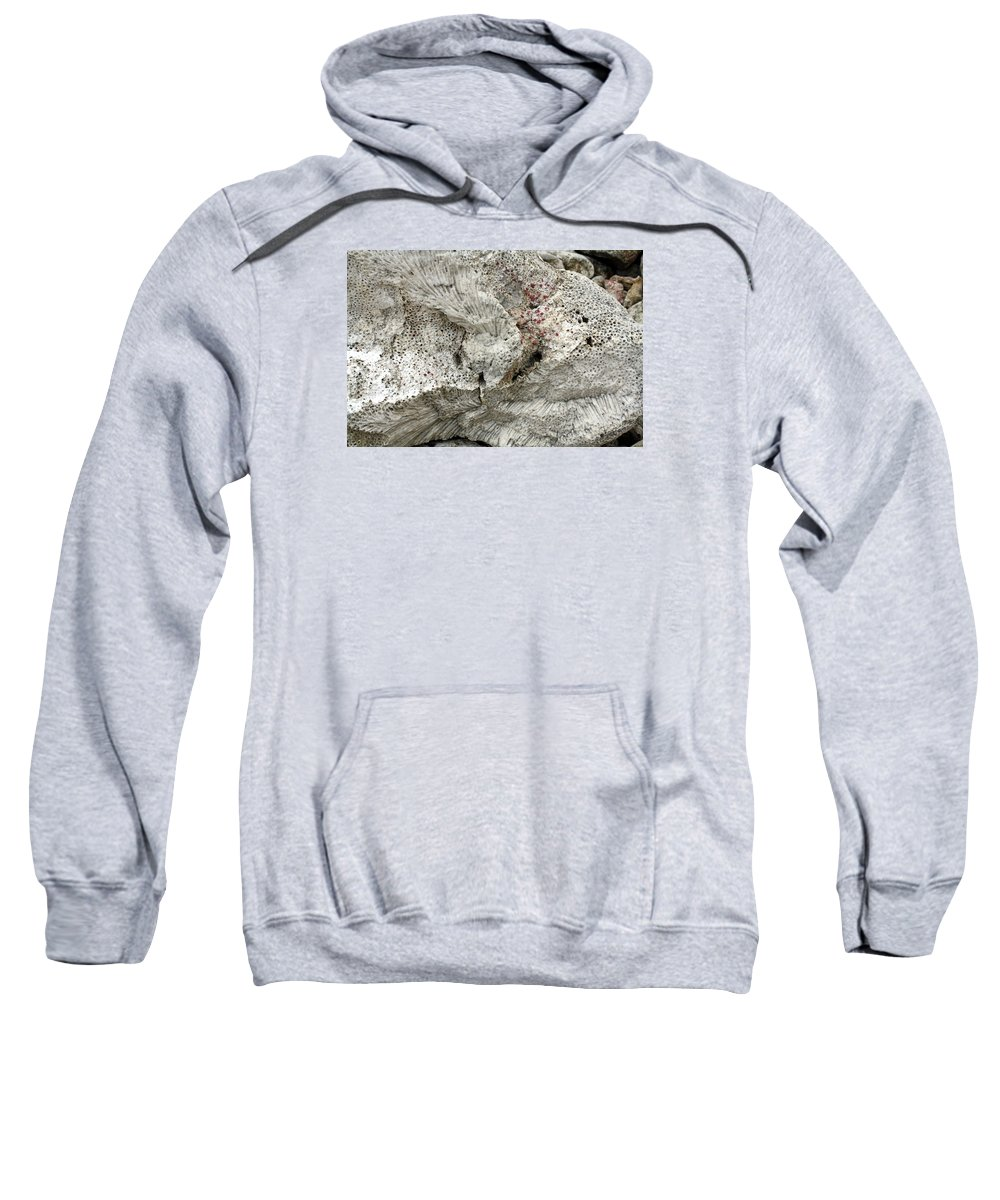 Bonaire Sweatshirt featuring the photograph Bonaire Coral And Shells 1 by June Goggins