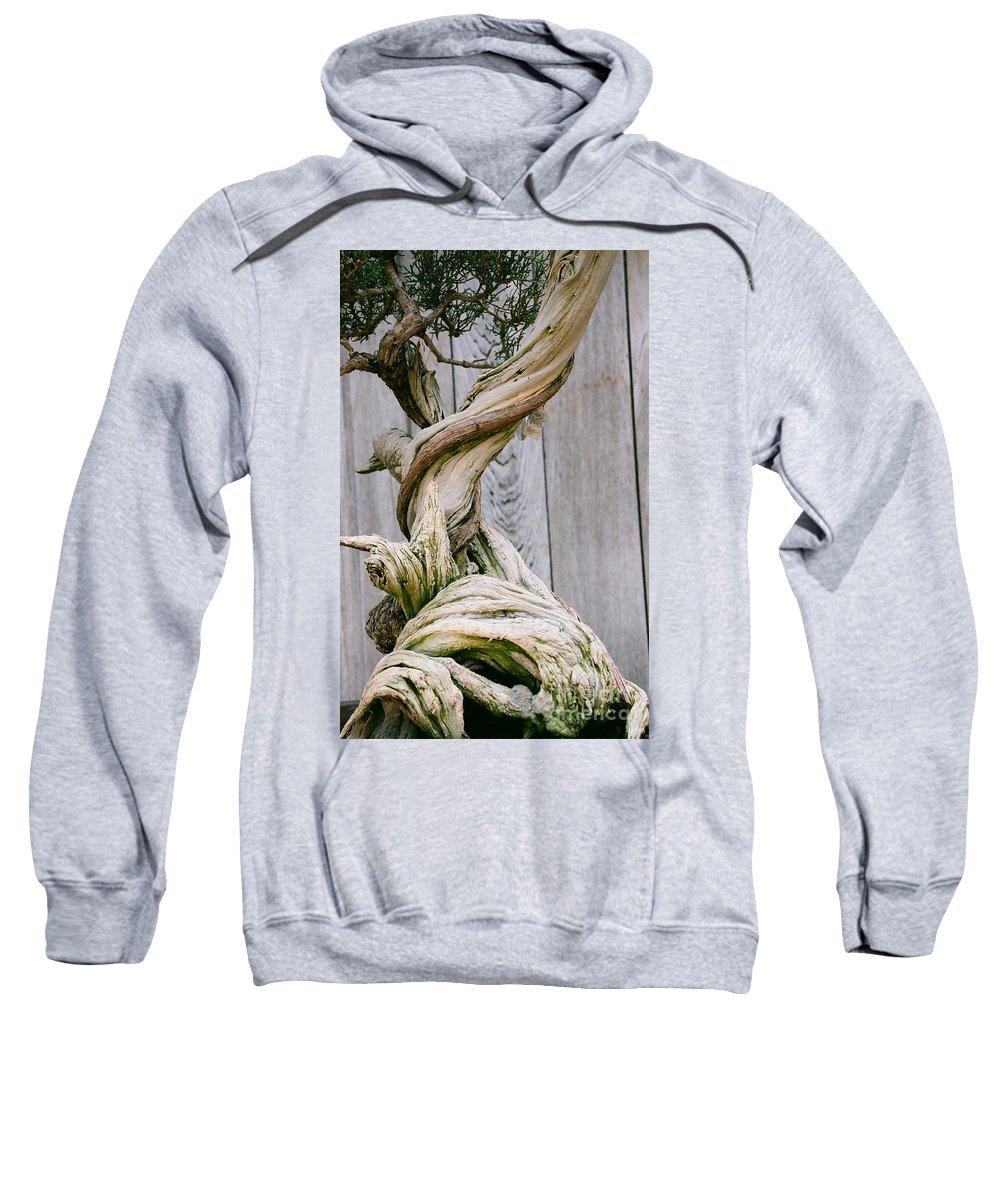 Tree Sweatshirt featuring the photograph Bonsai by Dean Triolo
