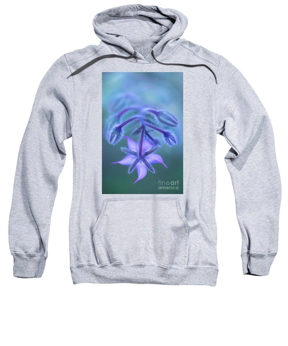 Borage Hooded Sweatshirts T-Shirts