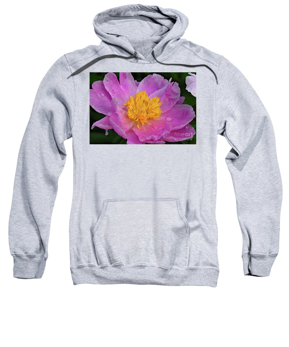 Bowl Of Beauty Peony Sweatshirt featuring the photograph Bowl Of Beauty Peony Catching The Rain by Cindy Treger