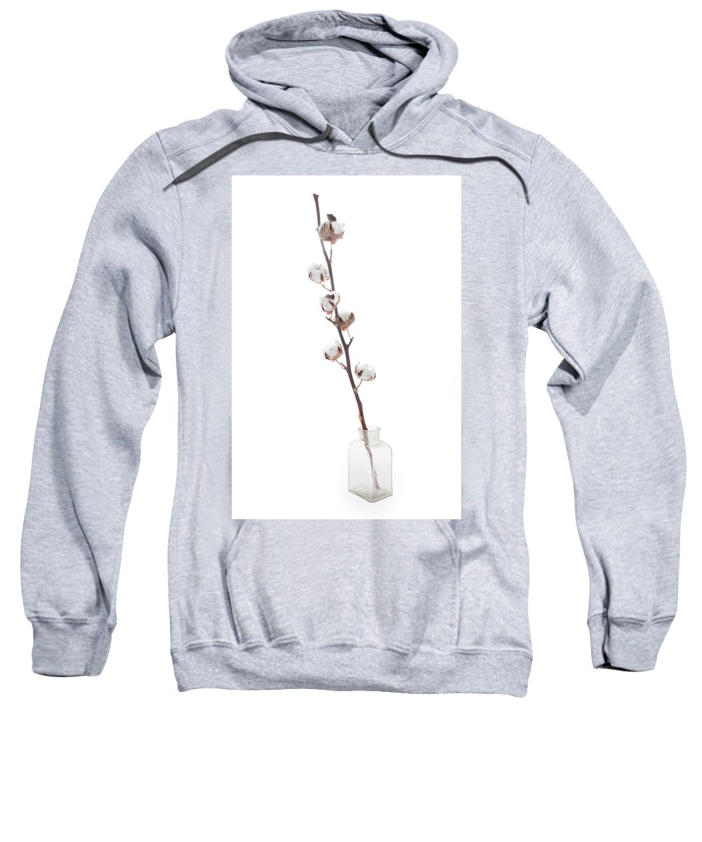 Agriculture Sweatshirt featuring the photograph Branch With Cotton In The Vase Isolated On White Background by Elena Rostunova