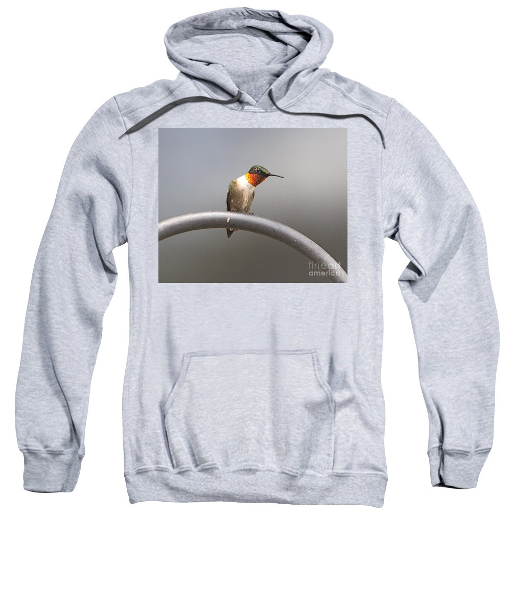 Humming Related Tags: Tulips Artwork Sweatshirt featuring the photograph Break Time by Robert Pearson