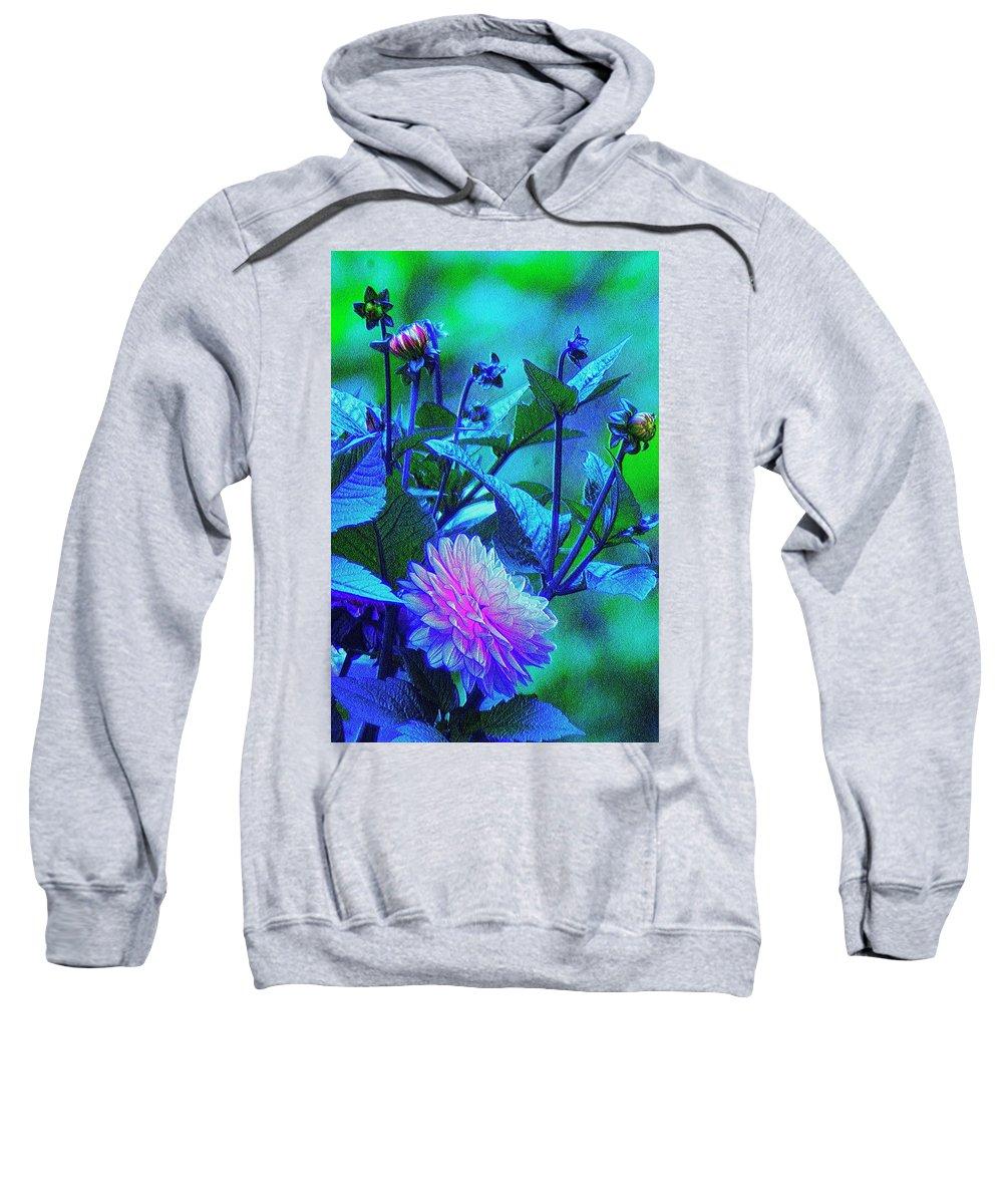 Bright Sweatshirt featuring the photograph Bright But Modest, Dahlia Mom. by Igor Malinovskii