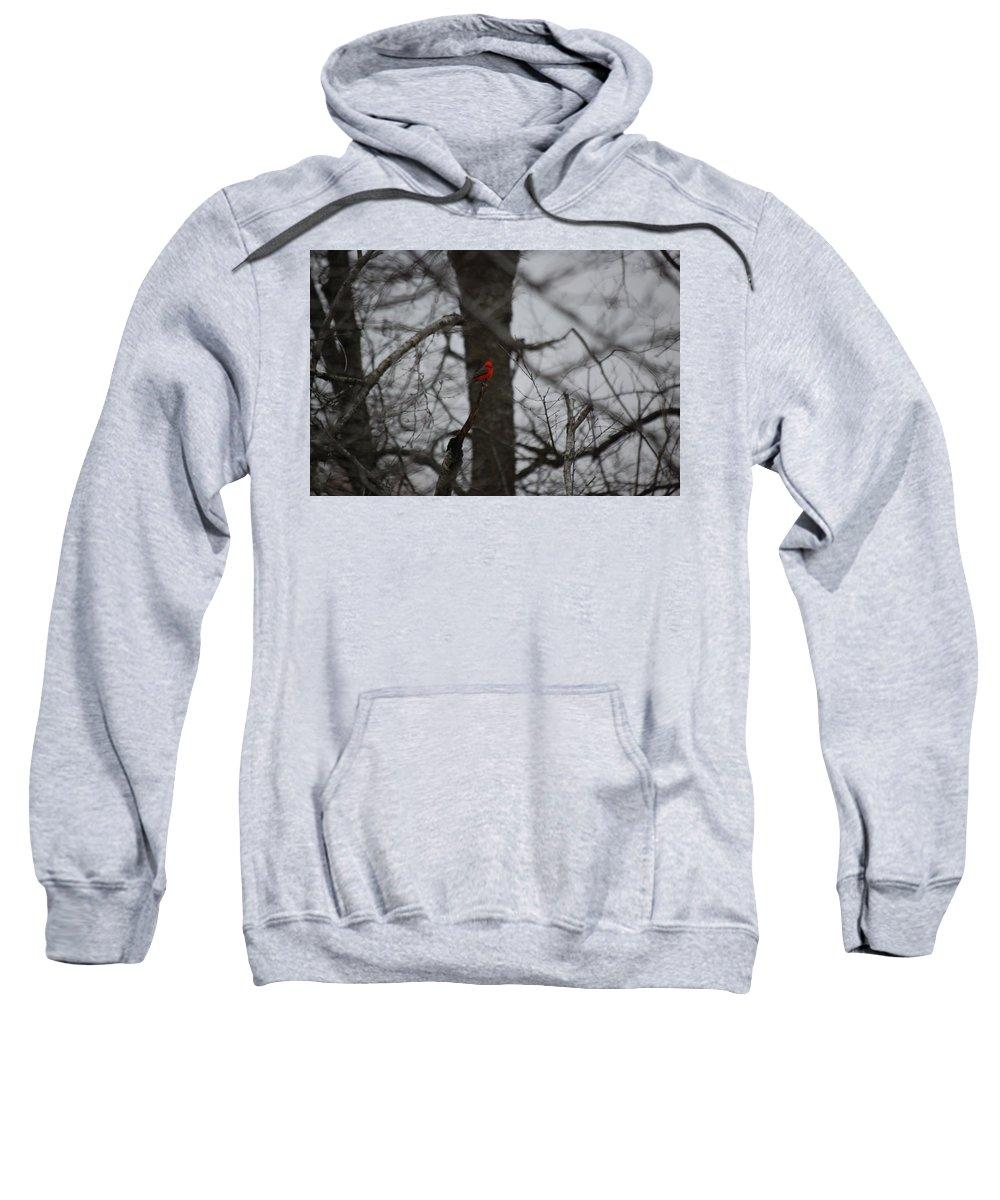Digita Photo Sweatshirt featuring the digital art bRIGHT SPOT ON A CLOUDY DAY by David Lane