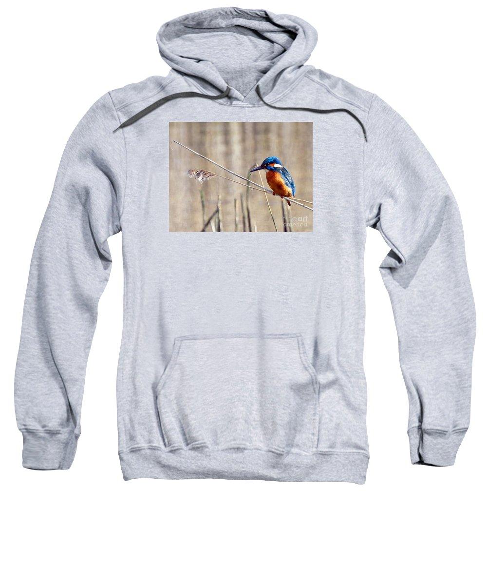 Kingfisher Sweatshirt featuring the photograph British Kingfisher by Paul Cummings