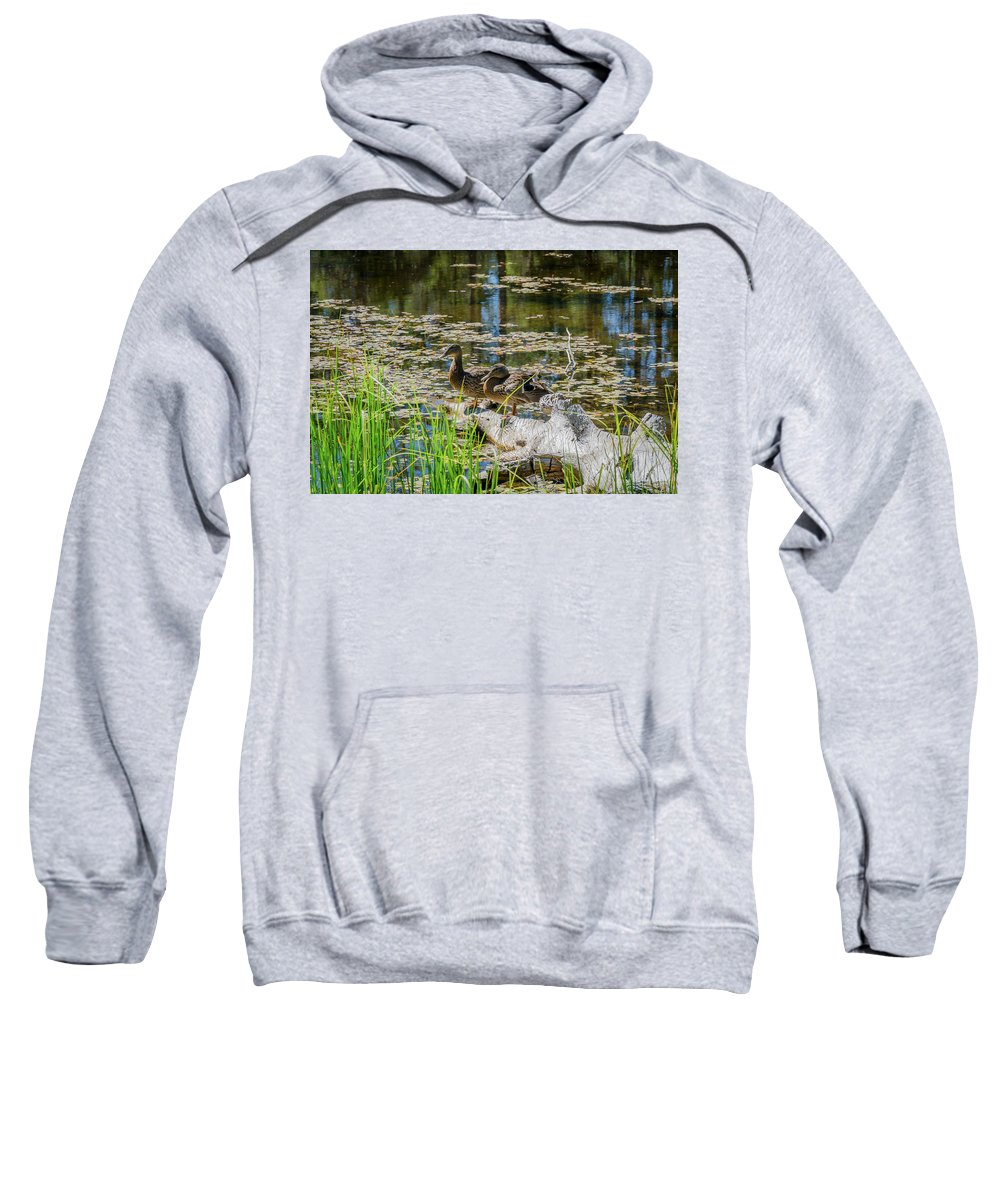 Landscape Sweatshirt featuring the photograph Brown Ducks On Log by Javier Flores