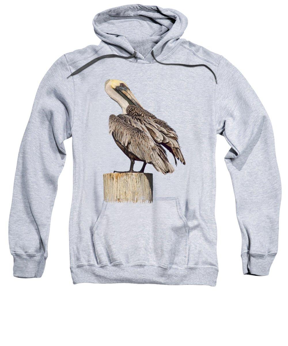Brown Pelican Sweatshirt featuring the photograph Brown Pelican - Preening - Transparent by Nikolyn McDonald