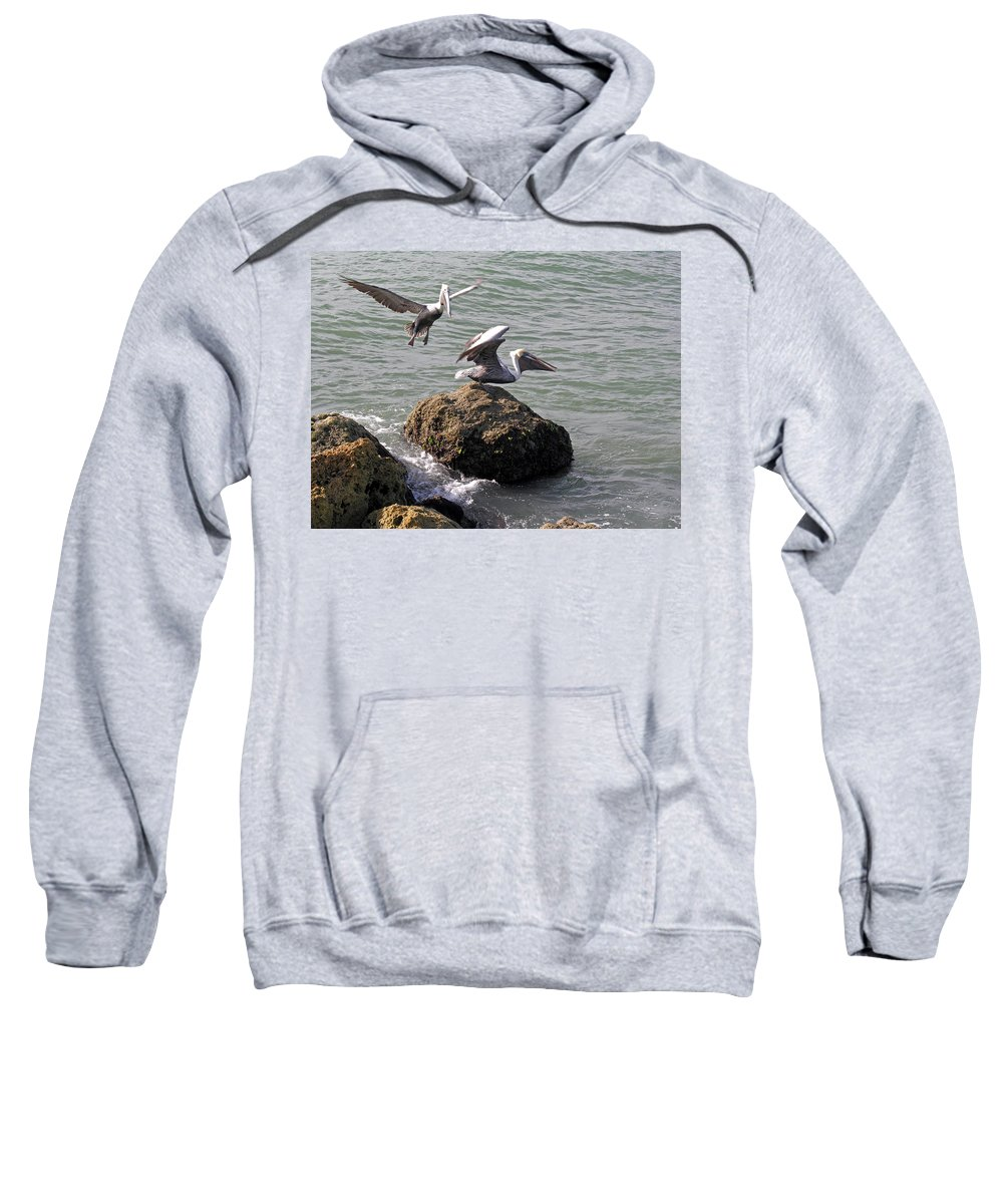 Pelican; Rock; Flying; Ocean; Sea; Bird; Florida; Action; Fight; Confrontation; Green; War; Fishing Sweatshirt featuring the photograph Brown Pelicans In Florida by Allan Hughes