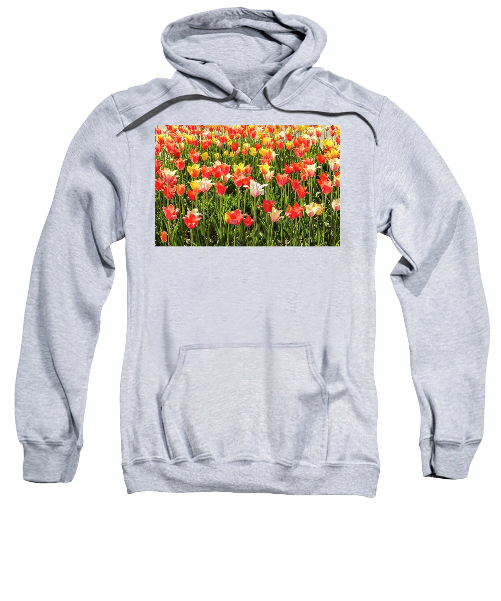 Tulips Sweatshirt featuring the photograph Brushed Tulips by Tammy Chesney