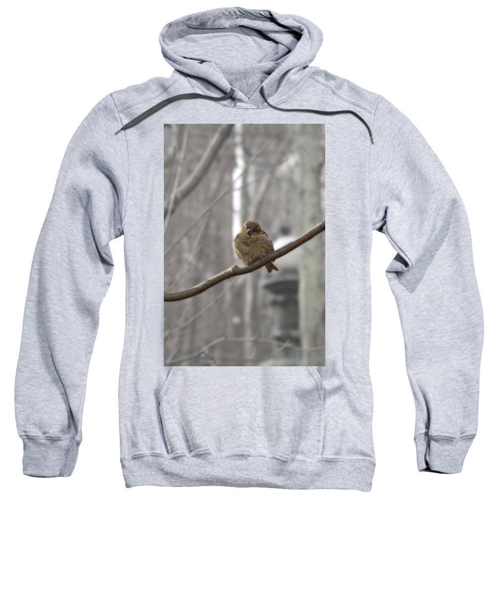Wild Sweatshirt featuring the photograph Bryant Park Bird Nyc by Henri Irizarri