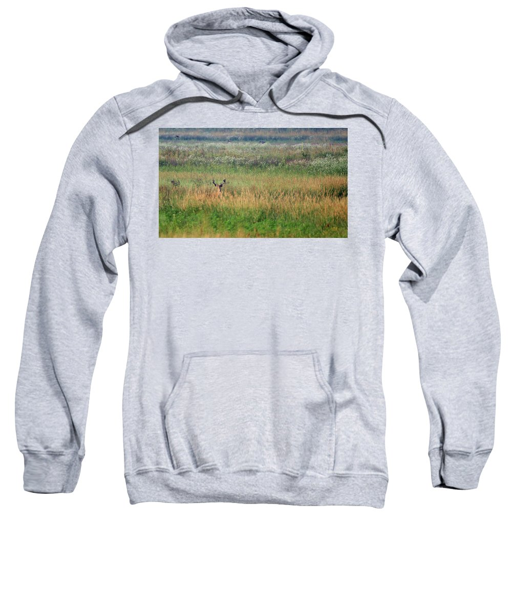 Whitetail Sweatshirt featuring the photograph Buck In Field by Brook Burling