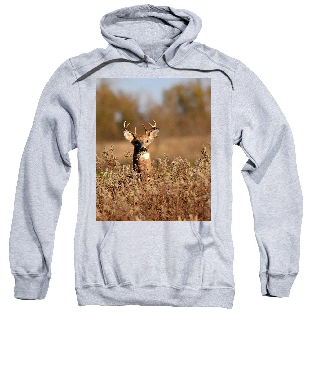 Buck Sweatshirt featuring the photograph Buck In The Weeds by Dwight Eddington