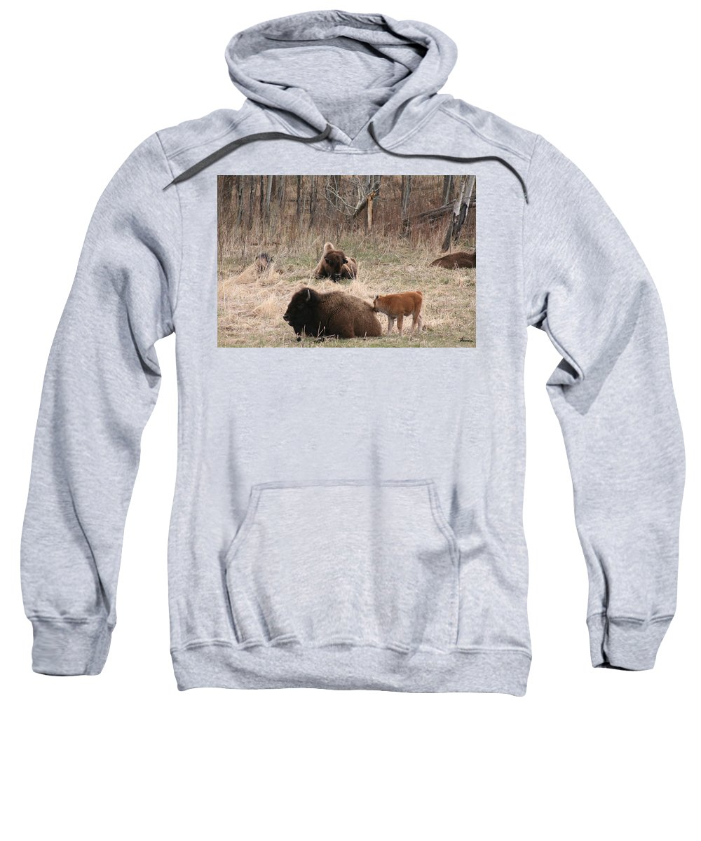 Bison Buffalo Calf Baby Animals Nature Love Native Sweatshirt featuring the photograph Buffalo And Calf by Andrea Lawrence