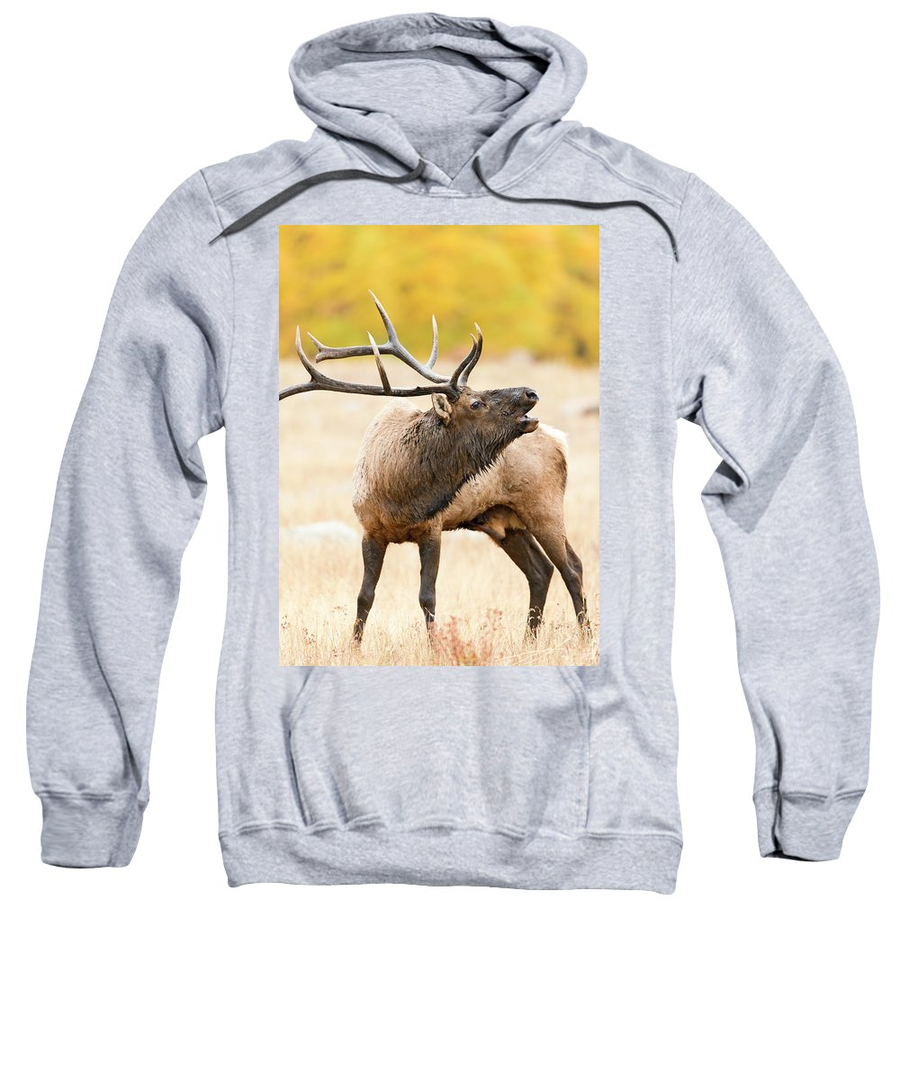 Bull Elk Sweatshirt featuring the photograph Bull Elk Bugling In The Fall by Gary Langley