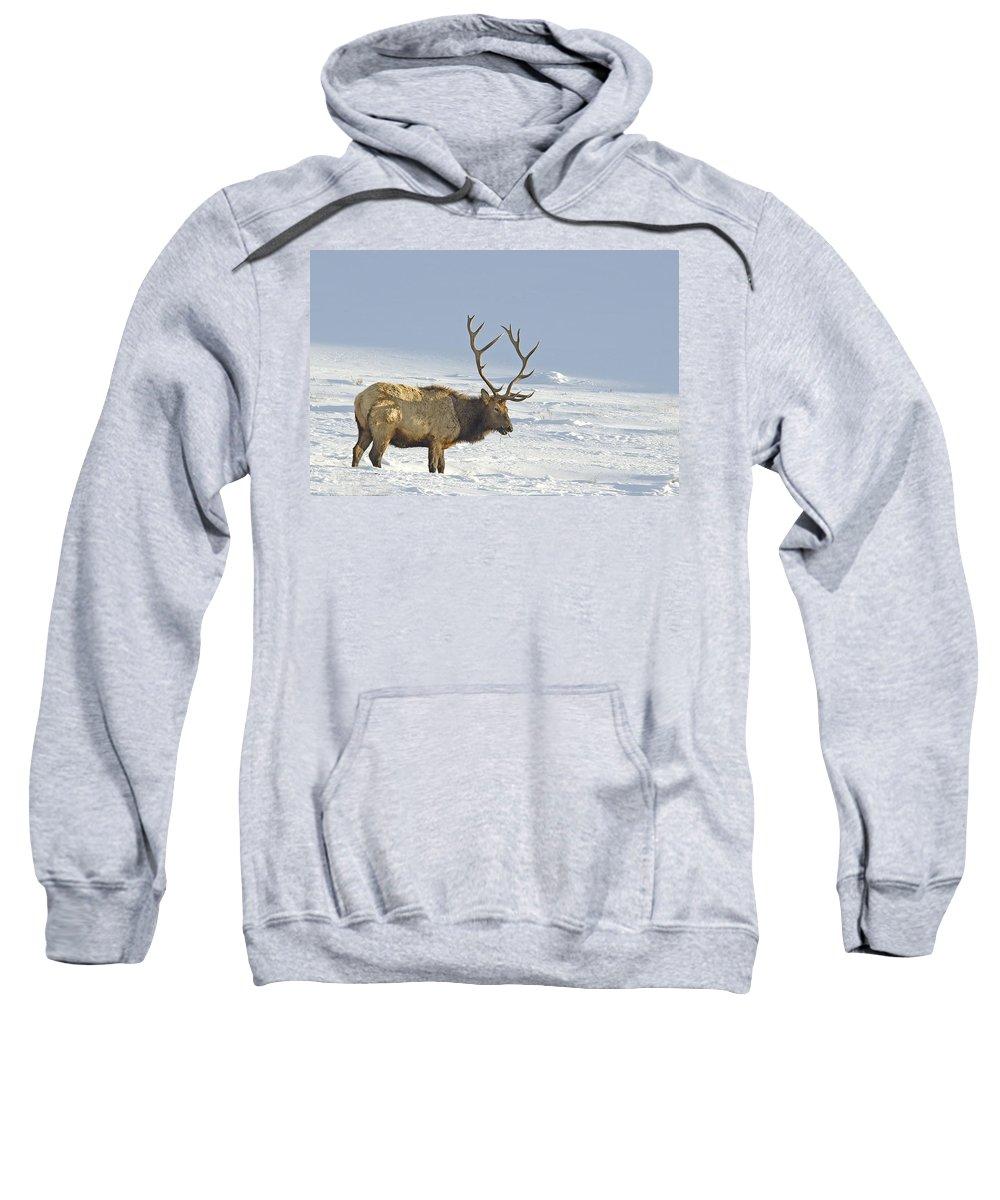 Elk Sweatshirt featuring the photograph Bull Elk In Snow by Gary Beeler