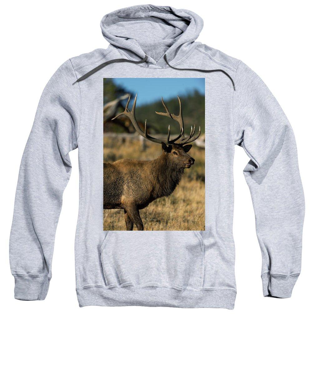 Bull Elk Sweatshirt featuring the photograph Bull Elk Profile by Gary Langley