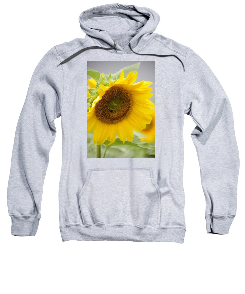 Flower Sweatshirt featuring the photograph Bumble Bee And The Sunflower by Tiffany Erdman