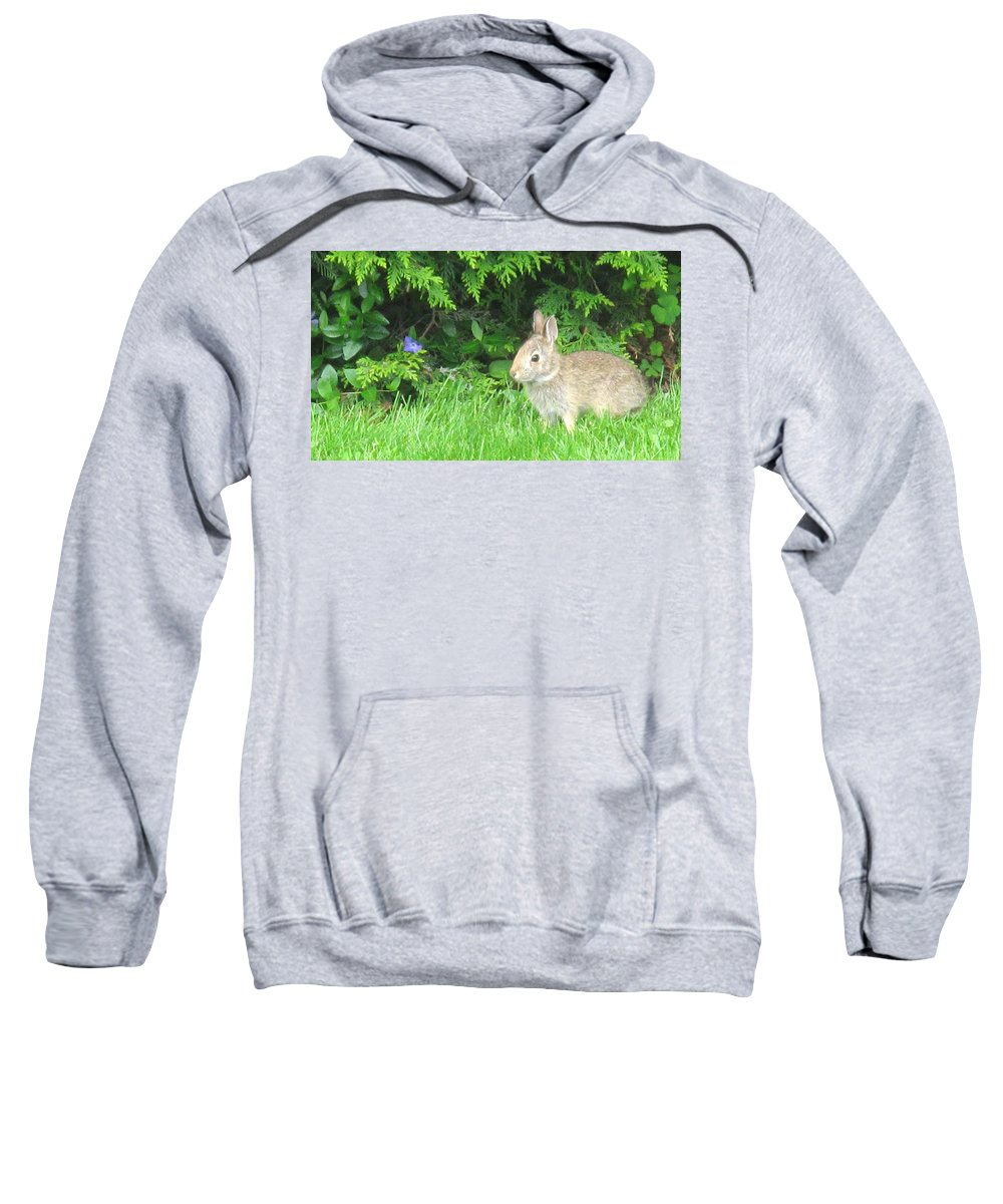 Rabbit Sweatshirt featuring the photograph Bunny In Repose by Ian MacDonald