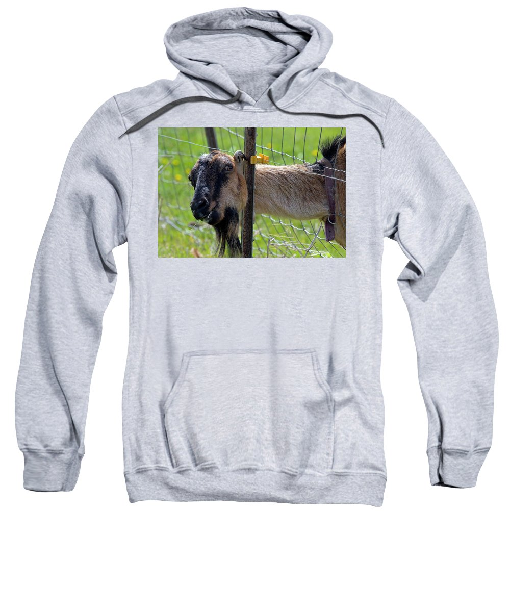 Goat Sweatshirt featuring the photograph Busted by Mike Dawson
