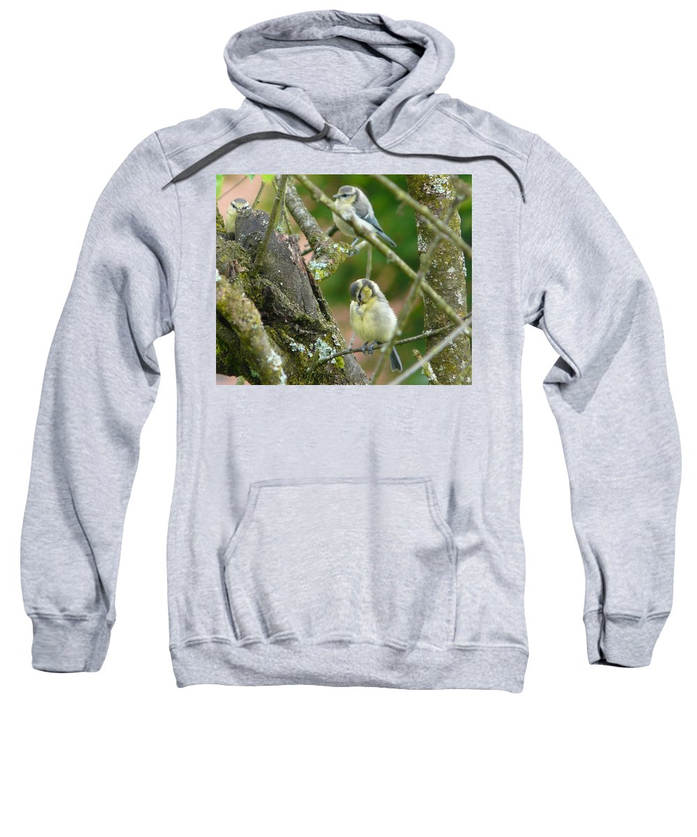 Bird Sweatshirt featuring the photograph Busy Tree by Valerie Ornstein