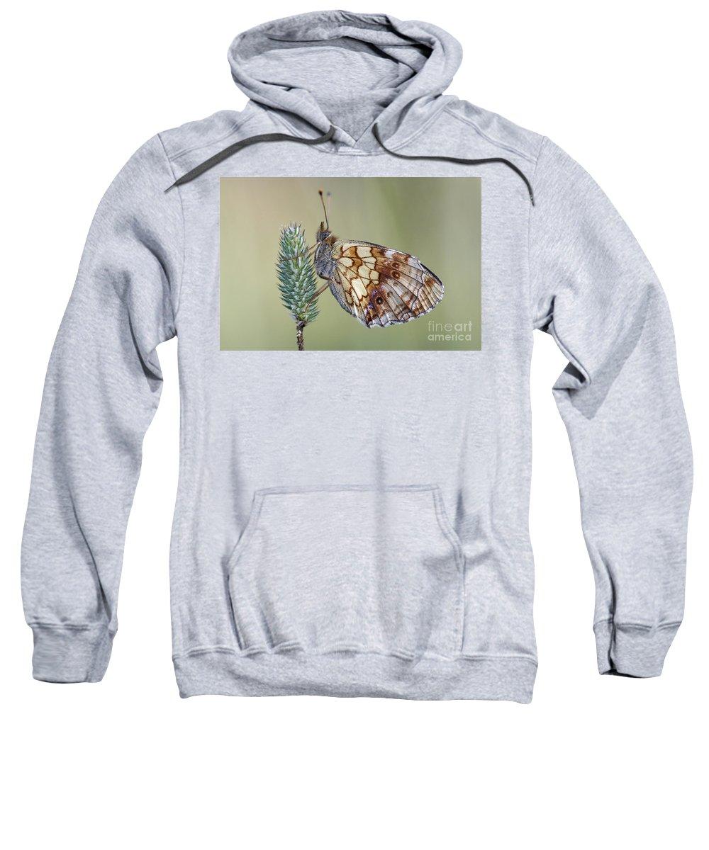 Macro Sweatshirt featuring the photograph Butterfly - Meadow Satyrid by Michal Boubin