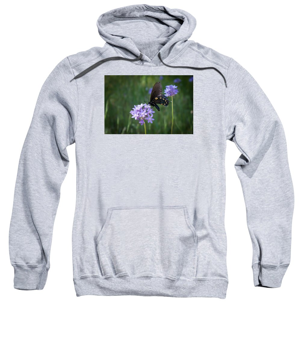 Sweatshirt featuring the photograph Butterfly 4 by Reed Tim