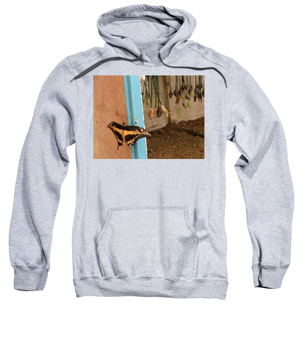 Butterfly Sweatshirt featuring the photograph Butterfly Drying His New Wings by Heather Lennox