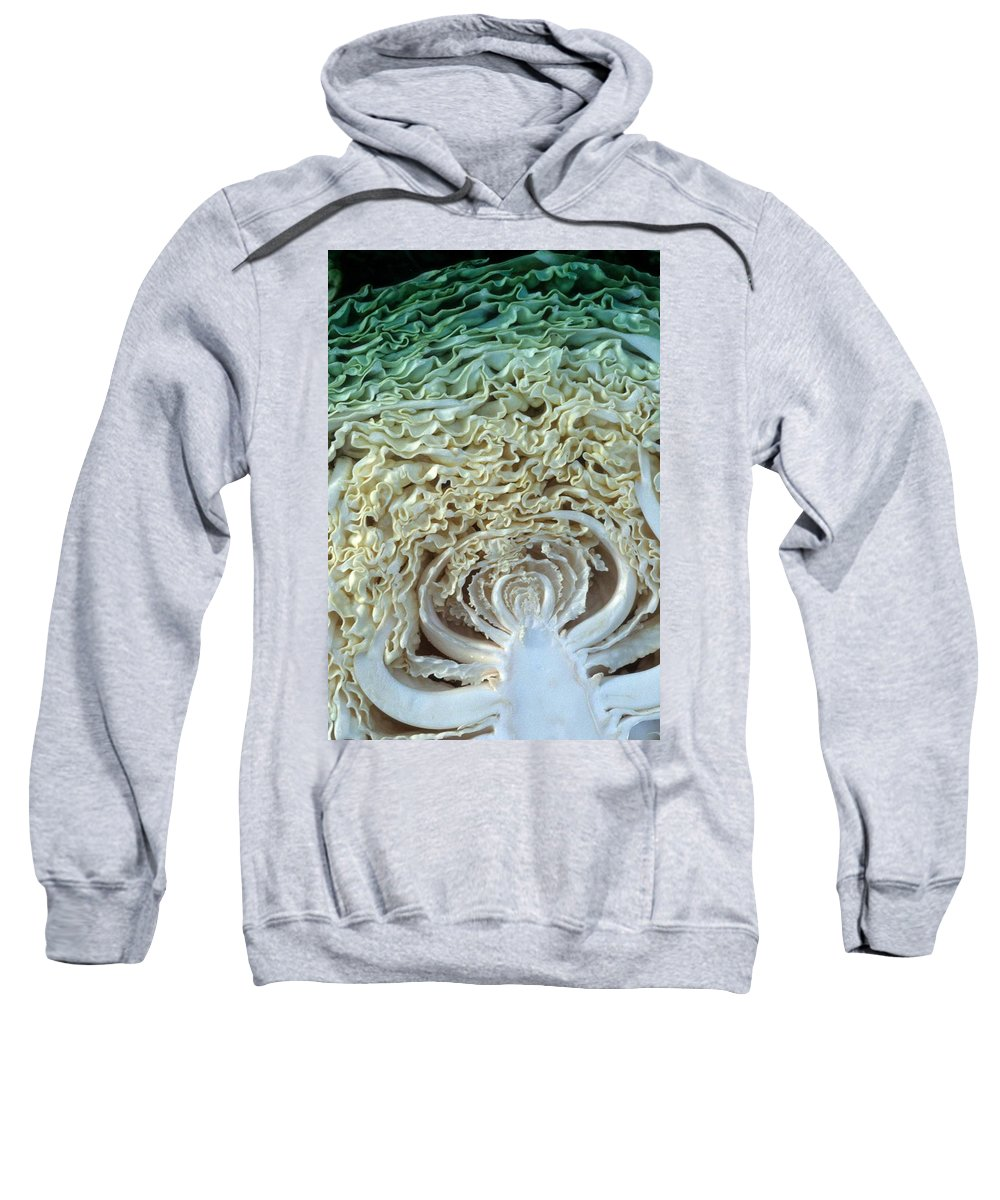 Cabbage Sweatshirt featuring the photograph Cabbage Universe by Laurie Paci