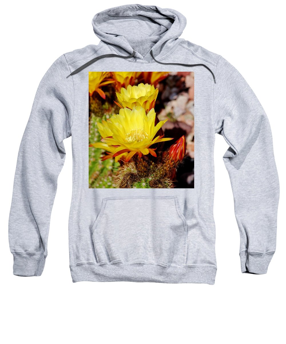 Cactus Sweatshirt featuring the photograph Cactus Bloom In Yellow 050715ab by Edward Dobosh