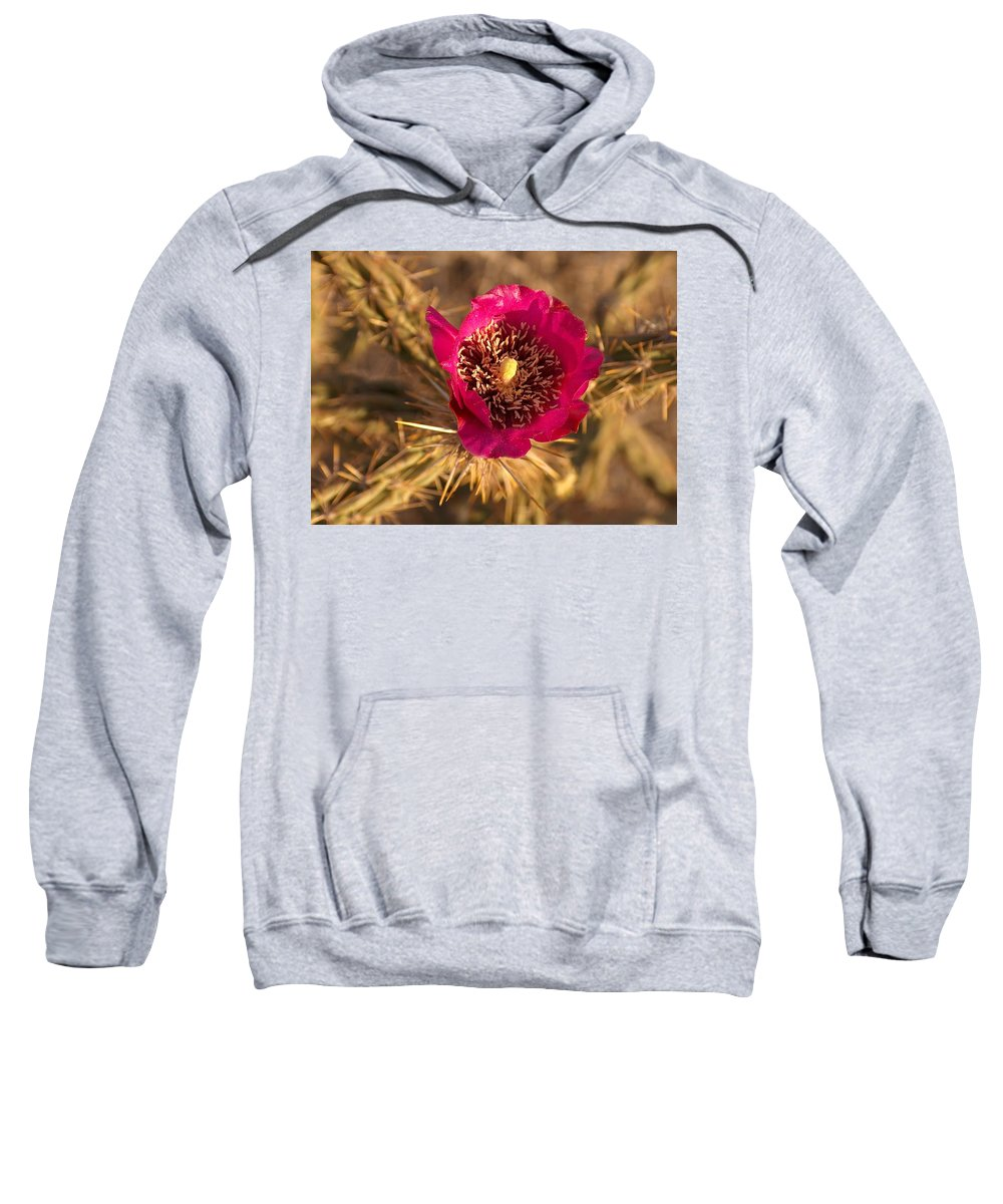 Cactus Flowers Wildflowers Sweatshirt featuring the photograph Cactus Flower 1 by Tim McCarthy