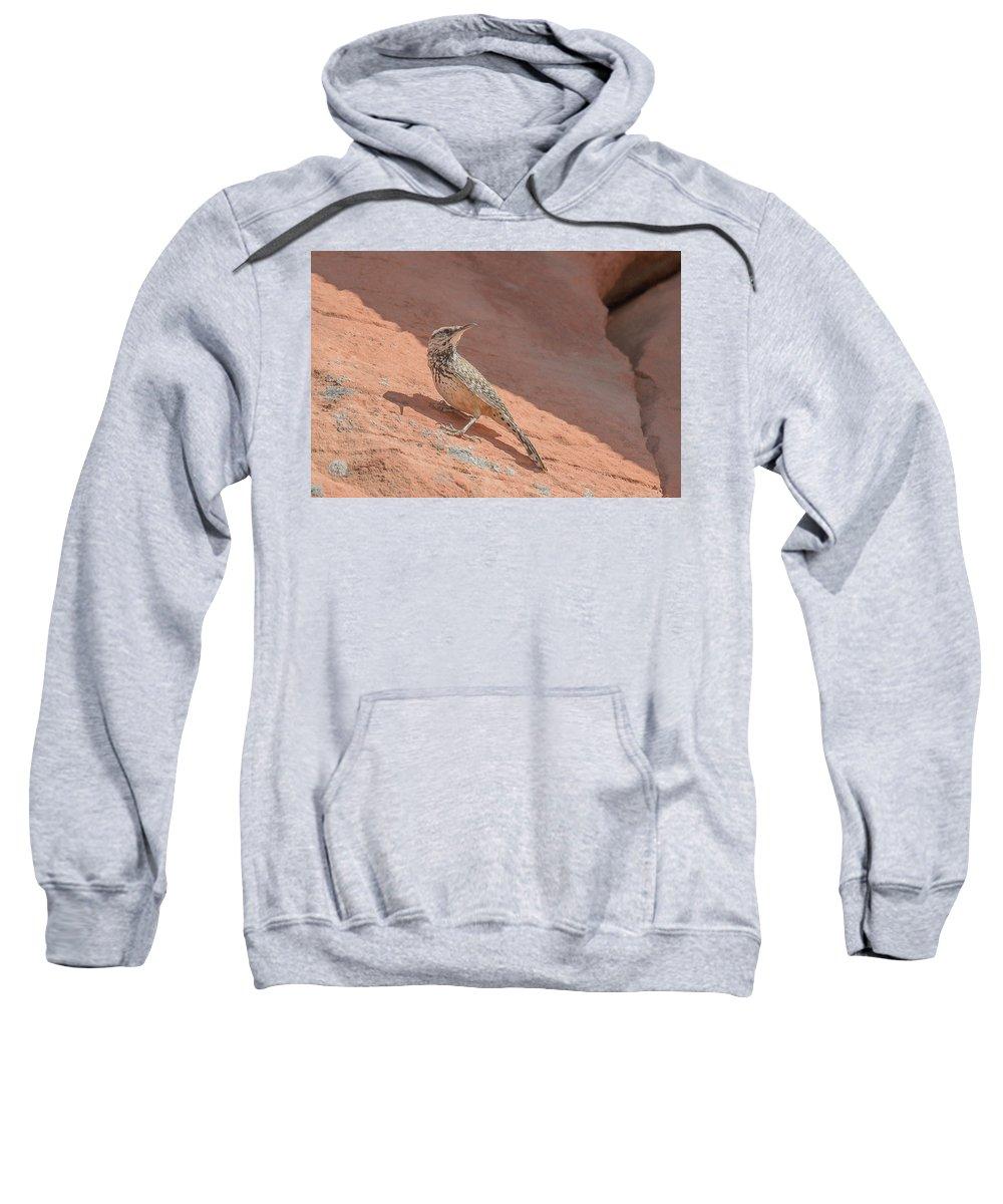 Cactus Wren Sweatshirt featuring the photograph Cactus Wren by Richard Eastman