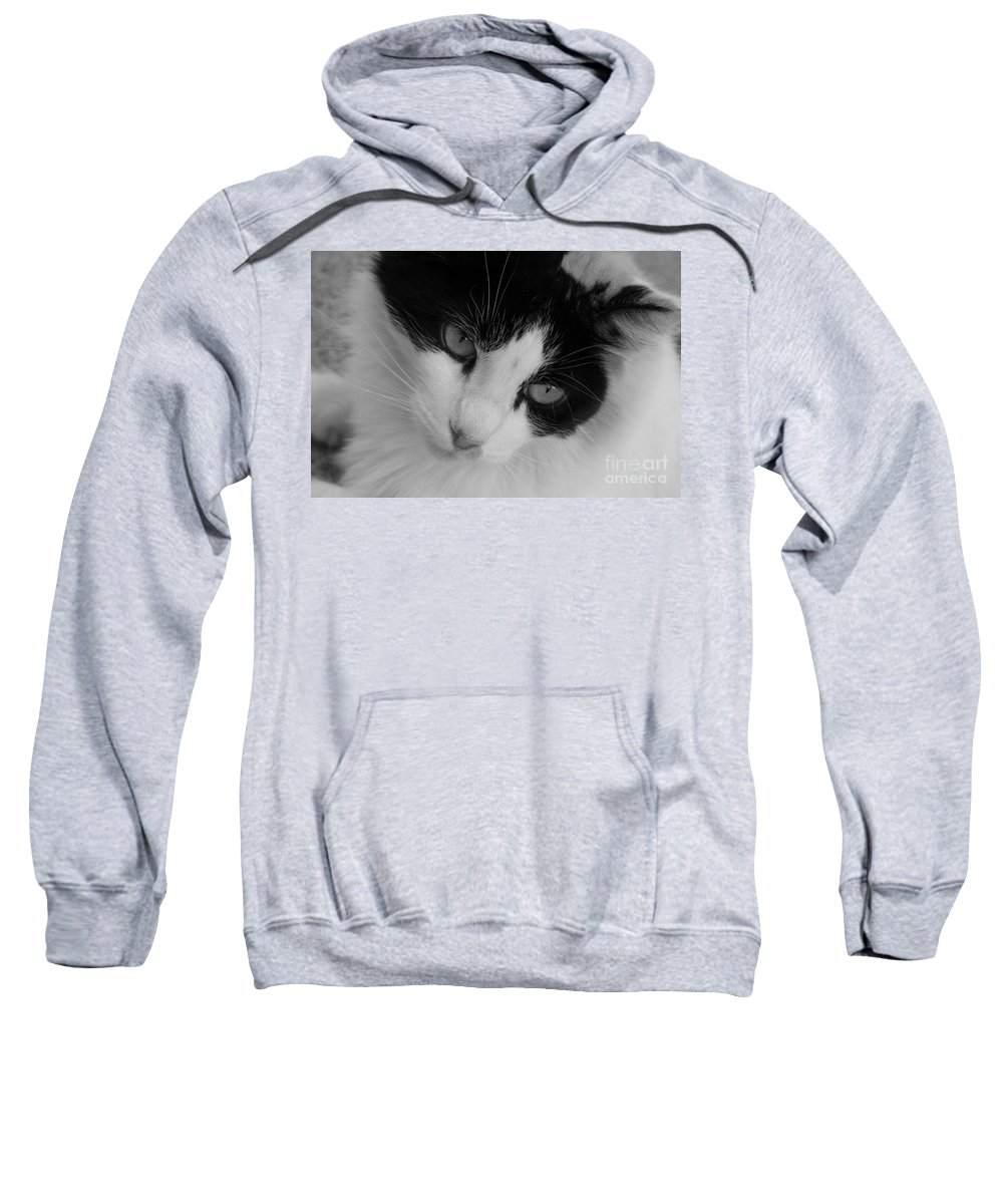 Black And White Sweatshirt featuring the photograph Calico by Mary Deal