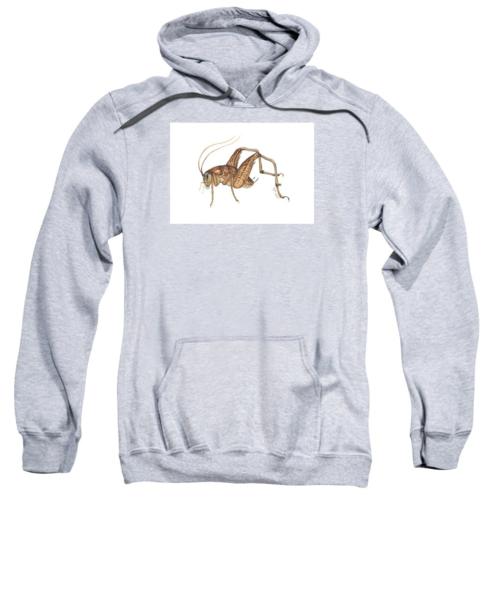 Insect Sweatshirt featuring the painting Camel Cricket by Cindy Hitchcock