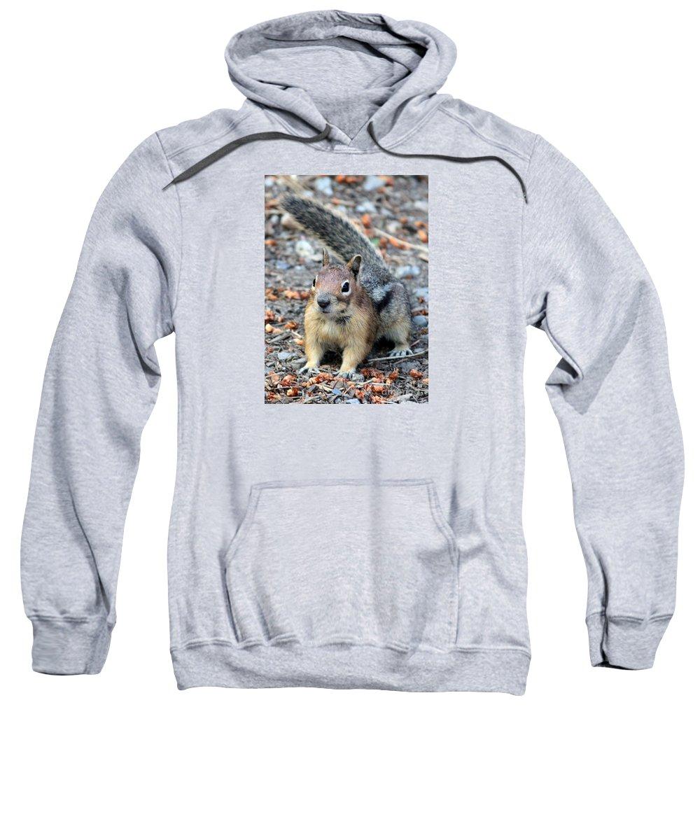 Chipmunk Sweatshirt featuring the photograph Campground Chipmunk by Carol Groenen