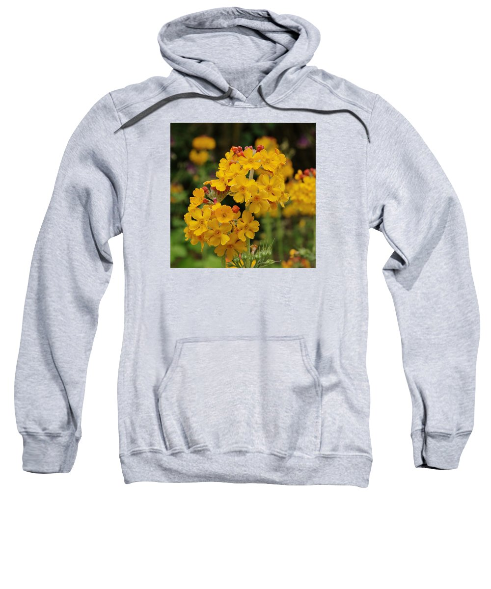 Flower Sweatshirt featuring the photograph Candelabra Primula by Adrian Wale