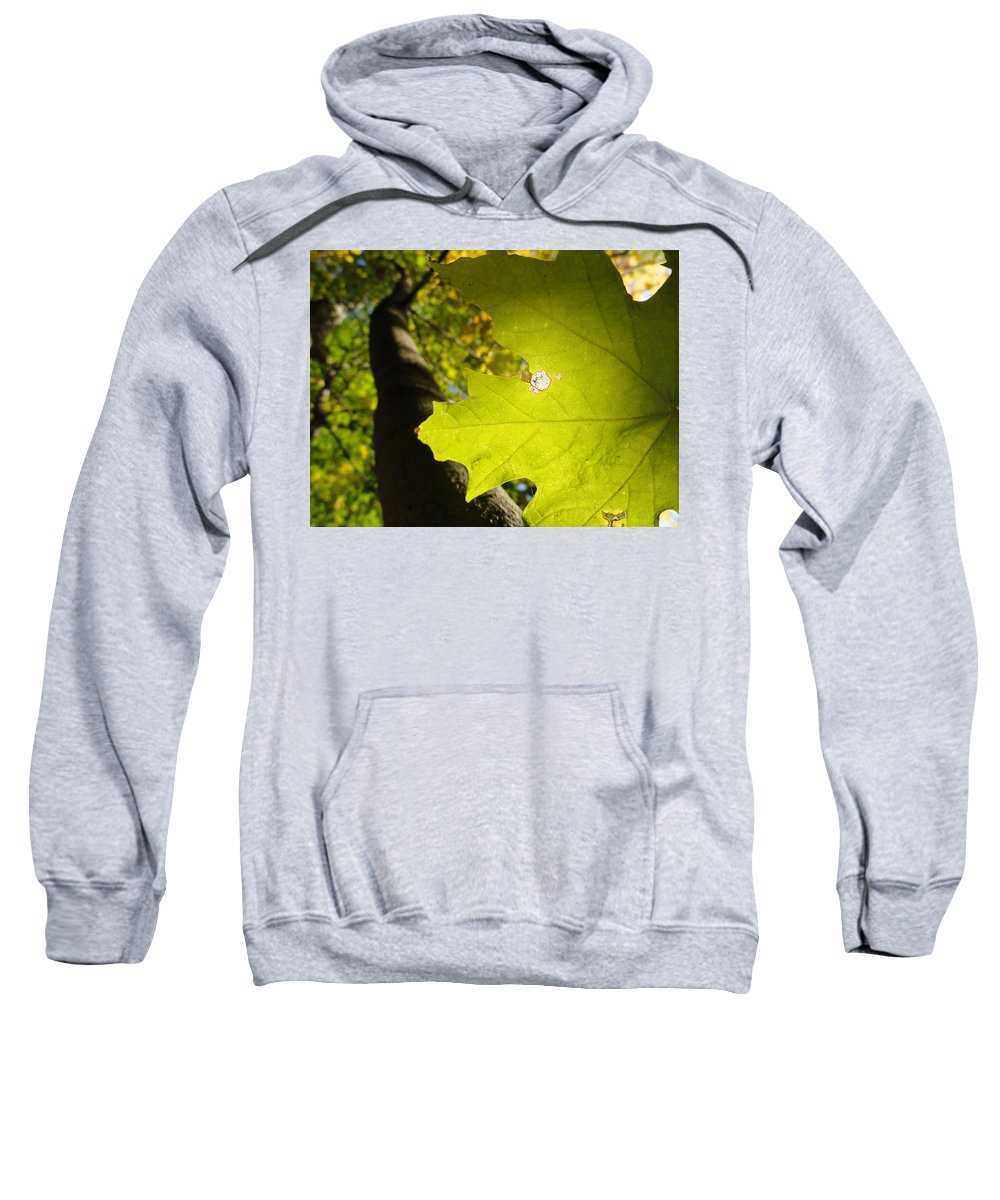 Leaves Sweatshirt featuring the photograph Canopy View by Trish Hale